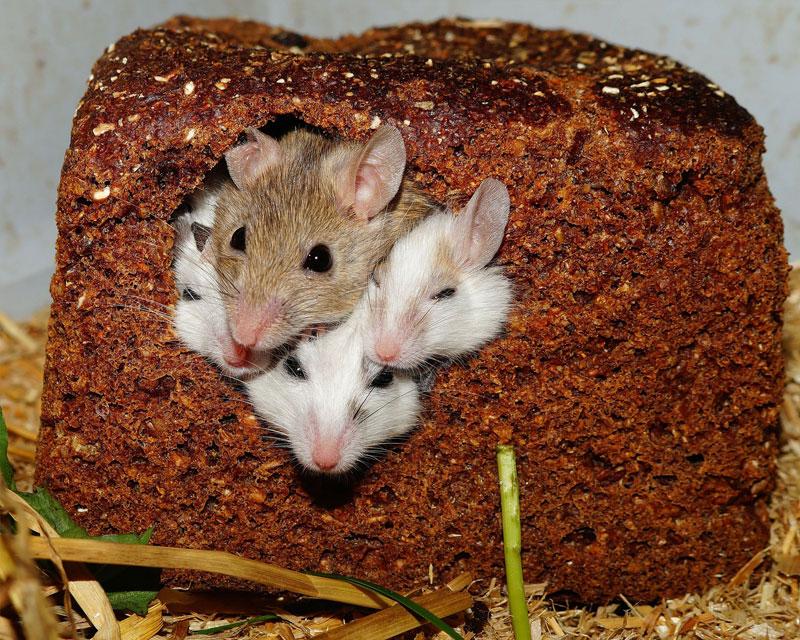 Mäusebefall Erkennen Ace Zydek